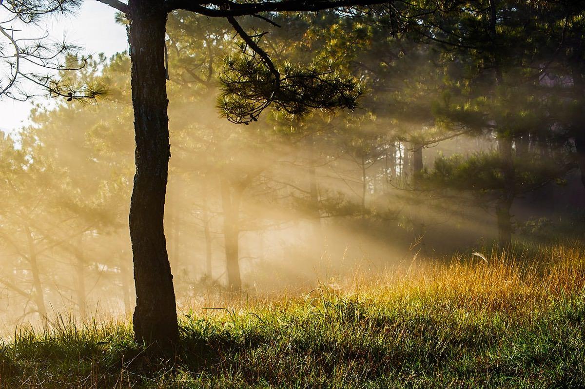 昆布の正しい保存場所②:直射日光が当たらない場所