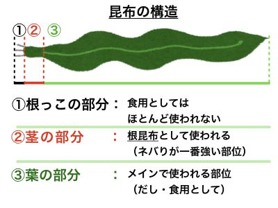 昆布の構造について