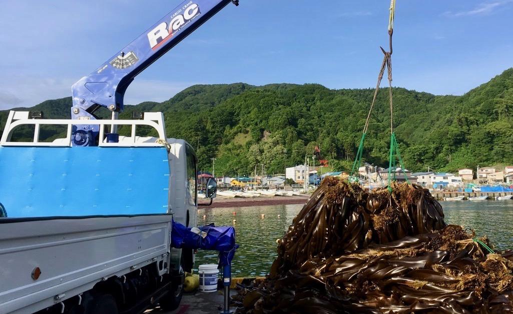 北海道産の真昆布の養殖モノについて